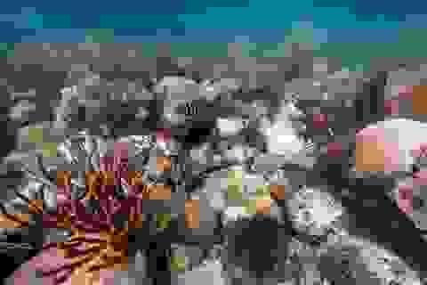"""Ngắm vẻ đẹp """"ngạt thở"""" của thế giới đại dương"""