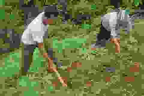 Đa số người trồng rừng vẫn nghèo