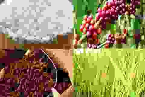 Hơn 5,2 ngàn tỷ để đổi mới ngành lúa gạo và cà phê tại Việt Nam