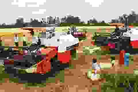 """Mua tạm trữ 1 triệu tấn gạo: Giá không """"cứu"""" nổi!"""