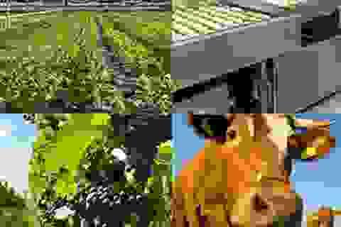 Nghề nông - Không bao giờ lo đói hay thất nghiệp (Kỳ 1)