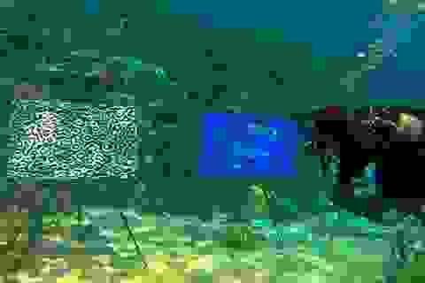 """Triển lãm tranh """"độc nhất vô nhị"""" … dưới đáy biển"""