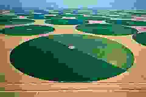 Độc đáo nông trại hữu cơ trên... sa mạc