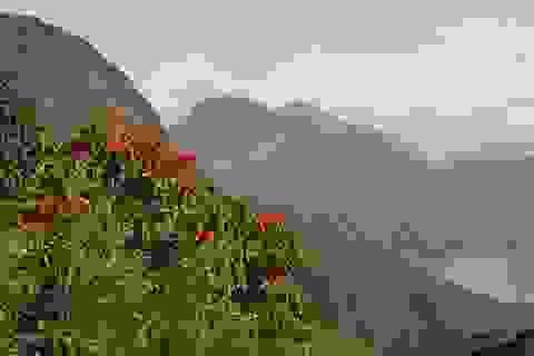 Rừng quốc gia Hoàng Liên lại đón du khách chinh phục đỉnh núi Phan Si Păng