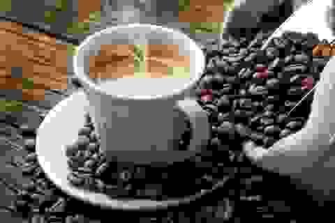 Khổ như say cà phê