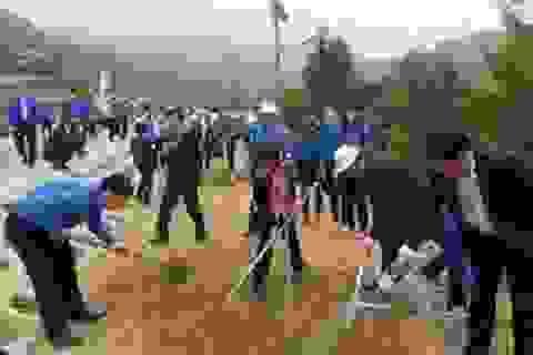 Trồng hơn 3.500 cây xanh tại khu mộ Đại tướng Võ Nguyên Giáp