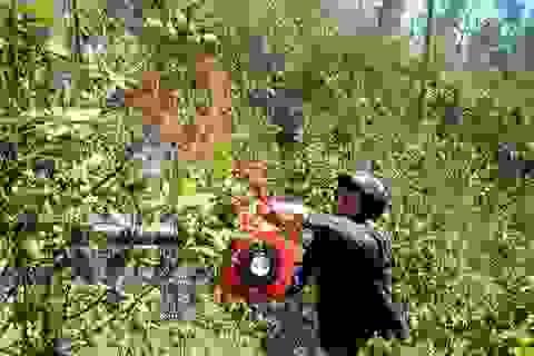 """Trời nắng nóng, cảnh báo cháy rừng ở mức """"nguy hiểm"""""""