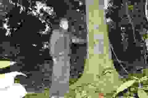 Quảng Trị: Ngút xanh những khu rừng thiêng của đồng bào Vân Kiều