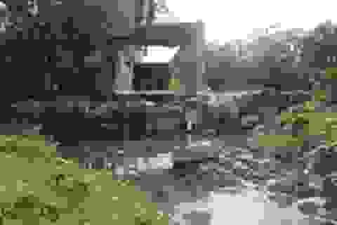 Tạm dừng hoạt động nhà máy bột cá gây ô nhiễm