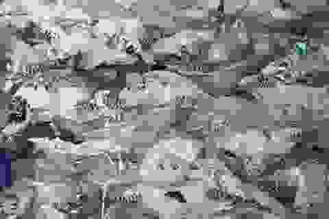 """Bộ Công an """"đột kích"""" 2 cơ sở chế tác rùa biển tại Nha Trang"""