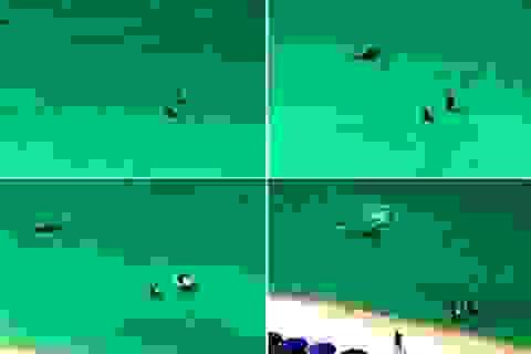 Hãi hùng cảnh cá mập khổng lồ truy sát du khách ở bờ biển