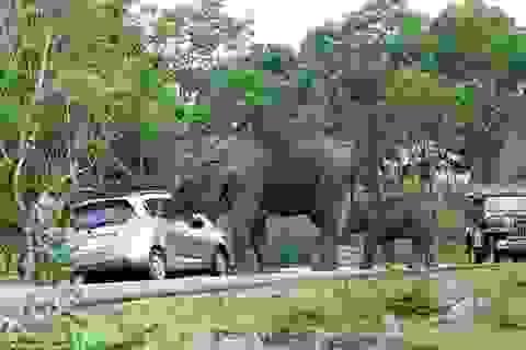 """Du khách sợ hãi khi bị con voi """"trấn lột"""" giữa đường"""