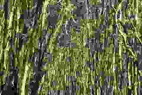 Về Trà Sư ngẩn ngơ giữa rừng tràm