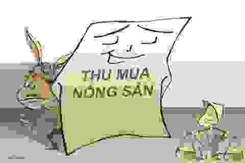 Tin thương lái Trung Quốc thì quả là u mê!