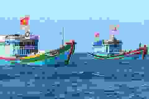 """Có nên ủng hộ ngư dân bằng """"75 ngày ăn cá biển""""?"""