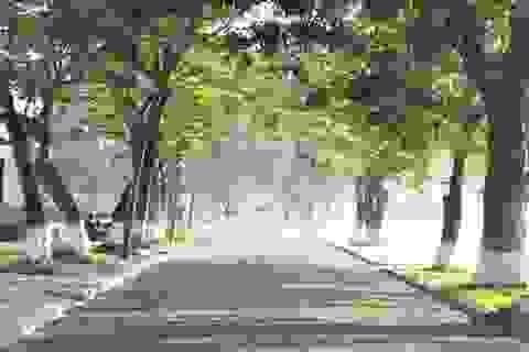 Nếu thành phố không còn cây xanh