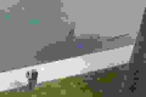 """Cá mập """"tung tăng"""" trong bể bơi gia đình"""