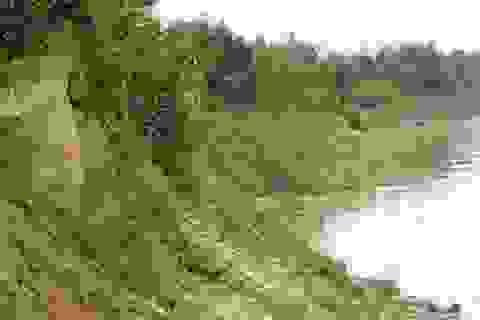 """""""Giặc cát"""" cày nát sông Lam"""
