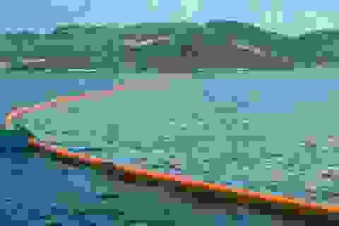 """Dự án """"khủng"""" thu gom rác trên đại dương"""