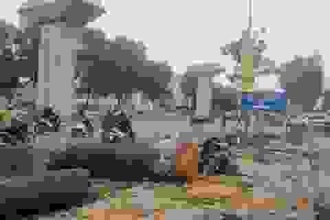 Thư ngỏ gửi Chủ tịch TP Hà Nội về 6.700 cây xanh sẽ bị chặt hạ