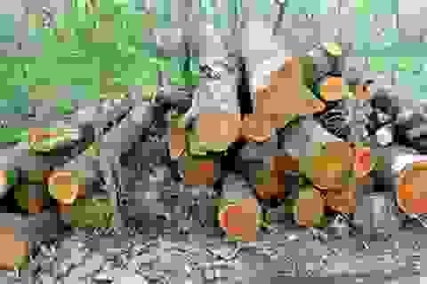 Hà Nội đấu giá lô gỗ trong đợt chặt hạ cây xanh được hơn 1 tỷ đồng