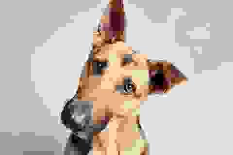 Chó tạo dáng chụp ảnh mong có chủ nhận nuôi