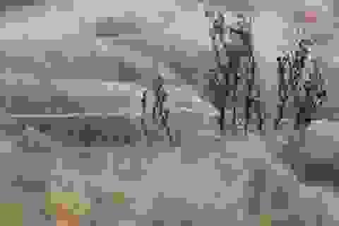 Mưa nhện che phủ thị trấn Úc