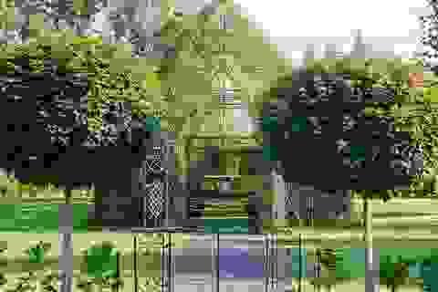 """Độc đáo """"nhà thờ cây"""" ở New Zealand"""