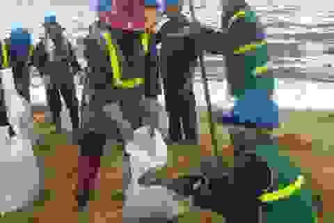 Huy động 400 người dọn dầu loang trên bãi biển Quy Nhơn