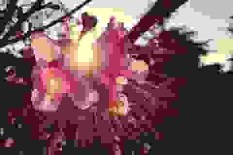 Những bức ảnh chuyển mùa đẹp ấn tượng chụp bằng iPhone