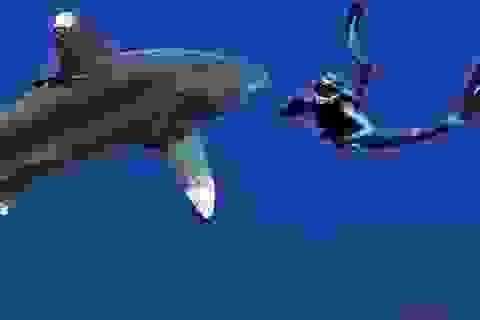 Thán phục cô gái có sở thích… bơi cùng cá mập