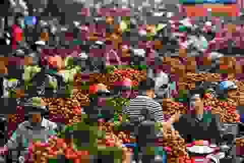 Các nhà khoa học hỗ trợ nông dân xuất khẩu 100.000 tấn vải thiều