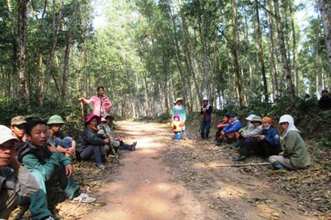 Thiếu đất sản xuất, dân ồ ạt chặt cây của lâm trường