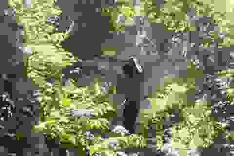 """Tỉnh """"chỉ đạo quyết liệt"""", lâm tặc vẫn rầm rộ phá rừng"""