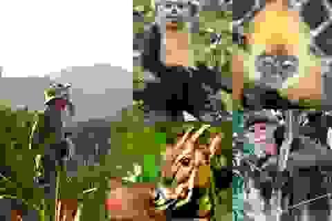 Giảm tiêu thụ các loài động vật hoang dã nguy cấp