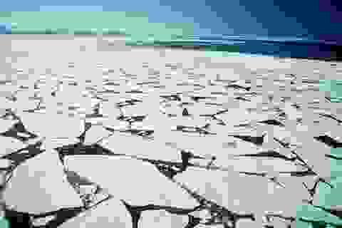 Băng biển tan thúc đẩy thảm thực vật xanh phát triển ở Bắc Cực