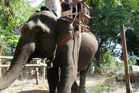 Cảnh săn bắt và thuần dưỡng voi rừng của người Tây Nguyên xưa