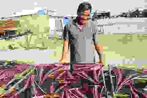 Lão ngư săn cá đuối khổng lồ