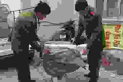 Bắt nửa tấn nầm lợn Trung Quốc bốc mùi chuẩn bị tuồn vào Thủ đô