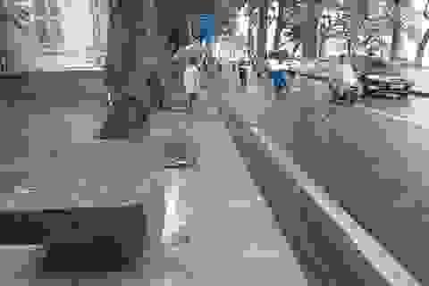 Ghế đá cổ lớn nhất Hà Nội đã được phục dựng