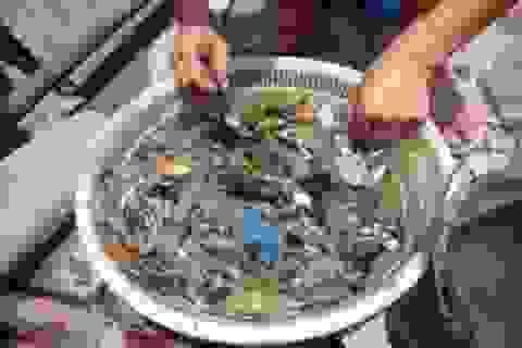 Trung Quốc: Nước sông ô nhiễm khiến hải sản cũng biến mất