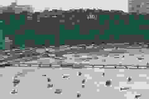 Thái Lan: Chìm phà tại đảo du lịch Pattaya, 7 người chết