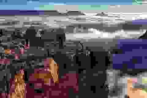 Nghẹt thở với cảnh dòng sông sương mù trên dãy Grand Canyon