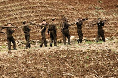 Triều Tiên: Sản lượng nông nghiệp tăng 30% nhờ cải cách