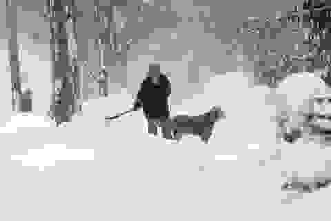 Mỹ: Nhiều vùng bị vùi sâu nửa mét trong tuyết trắng
