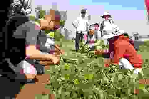 Rộn ràng lễ hội cầu bông ở làng rau hơn 500 tuổi