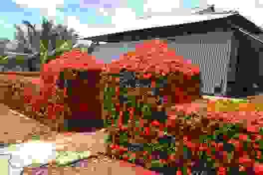 Chiêm ngưỡng ngôi nhà quê với hàng rào độc khiến thị dân chỉ biết mơ ước