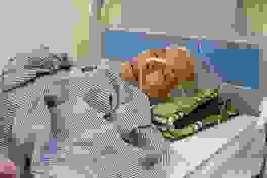Trên giường bệnh, bà cầu xin sự sống cho cháu trai qua nhiều lần phẫu thuật