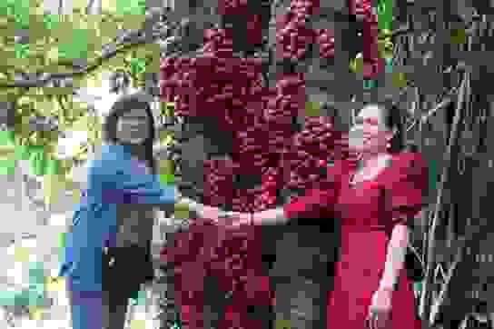 Phú Yên: Khai trương tuyến du lịch cao nguyên Vân Hòa