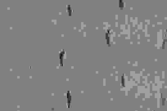 Từ dấu chân phát hiện ra hành trình nguy hiểm của một đứa trẻ thời tiền sử